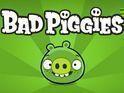 Bad Pigs